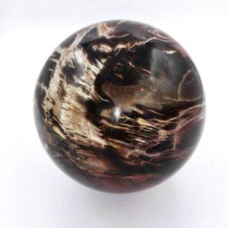 sphère en bois fossile